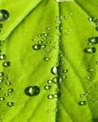 waterleaf.jpg wallpaper 1