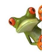 Peeking Frog wallpaper 1