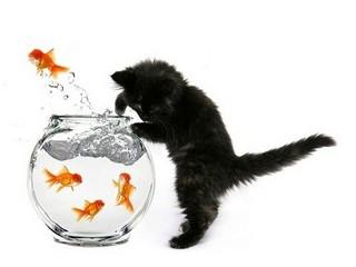 Free Fishin Kitten phone wallpaper by missjas