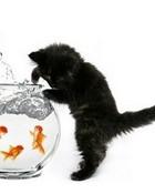 Fishin' Kitten wallpaper 1