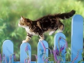 Free Spring Kitten phone wallpaper by missjas