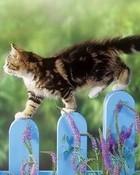 Spring Kitten