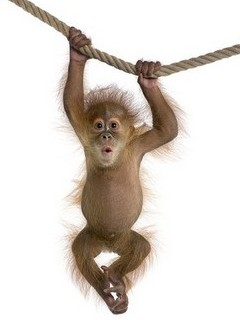 Free Funny Monkey phone wallpaper by missjas
