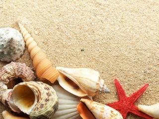 Free Shell Beach  phone wallpaper by missjas