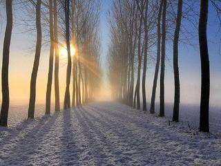 Free Winter Sun Through Trees phone wallpaper by missjas