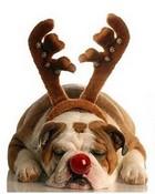 I Am Rudolph ....