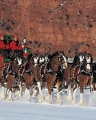 Clydesdale Christmas wallpaper 1
