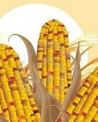 Thanksgiving Indian Corn