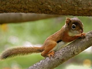 Free Baby Squirrel phone wallpaper by missjas