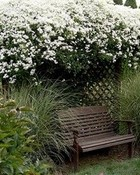Have a Seat in the Garden