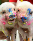 pig+pictures+002.jpg