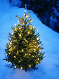 Free One Little Christmas Tree phone wallpaper by missjas