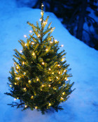 One Little Christmas Tree wallpaper 1