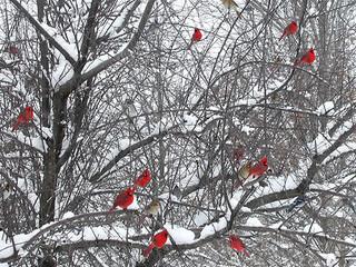 Free Snow Birds phone wallpaper by missjas