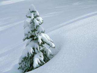 Free Little Winter Pine phone wallpaper by missjas