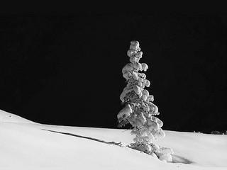 Free Winter Pine phone wallpaper by missjas