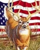 buck pic.jpg wallpaper 1