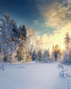 Winter wallpaper 1