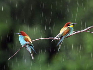 Free Birds In The Rain phone wallpaper by missjas