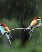 Birds In The Rain wallpaper 1