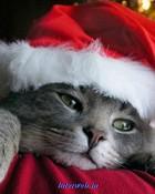 Christmas kitty.jpg