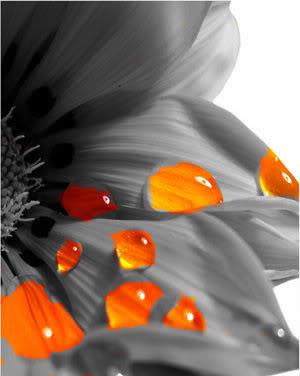 Free Wavering_Flower_by_ctrc.jpg phone wallpaper by jennaalyssa