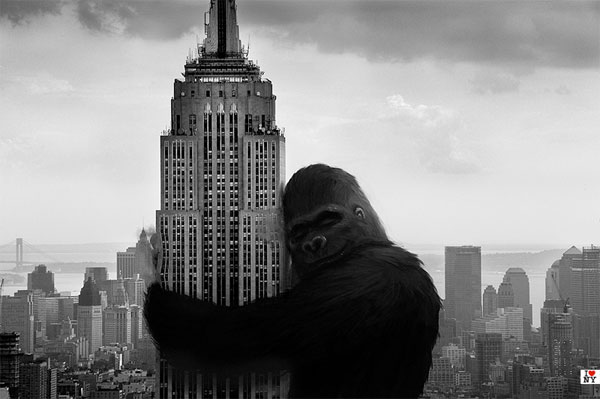 Free king kong <3s empire state building phone wallpaper by cooper97