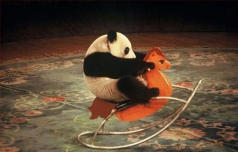 Free 2010-11-02-14-41-36-7-a-mischievous-panda[1].jpg phone wallpaper by ritaothello