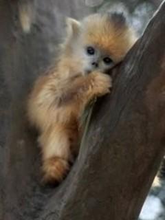 Free Cute Baby Monkey phone wallpaper by missjas