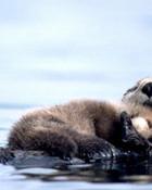 Mum and Baby Otter