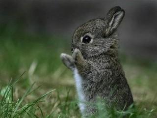 Free Adorably Cute Baby Bunny phone wallpaper by missjas