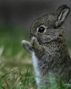 Adorably Cute Baby Bunny