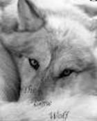 Bored wolf.jpg