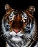 Free Tiger.jpg phone wallpaper by takanyan96