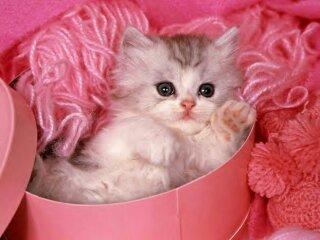 Free kitten phone wallpaper by tabie