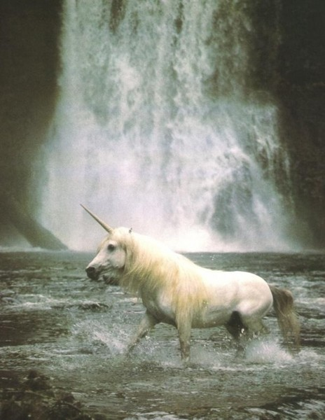 Free unicorn phone.jpg phone wallpaper by ayychubss