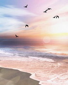 Footprints-in-the-Sand-Live-Wallpaper.jpg