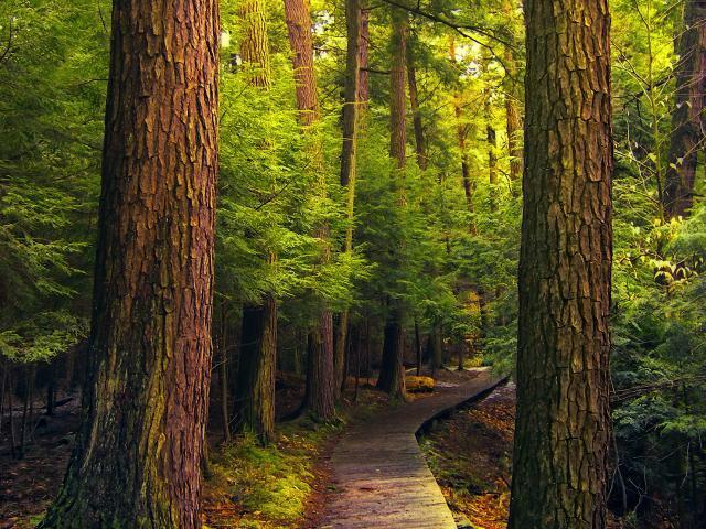 Free Nature Trail2 phone wallpaper by bwigley84