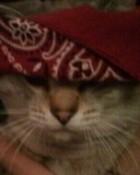 Gangster Kitty