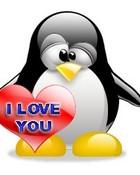 i love u penguin style