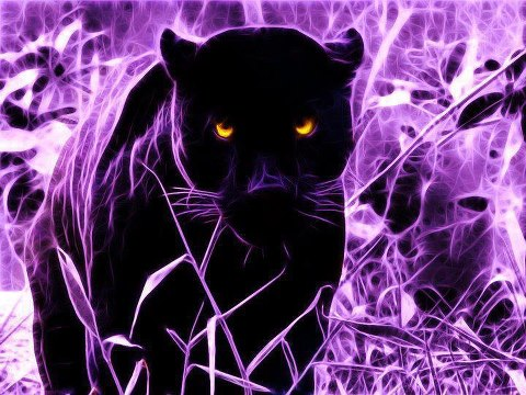 Free panther in purple grass phone wallpaper by starrr72