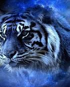 tiger in blue