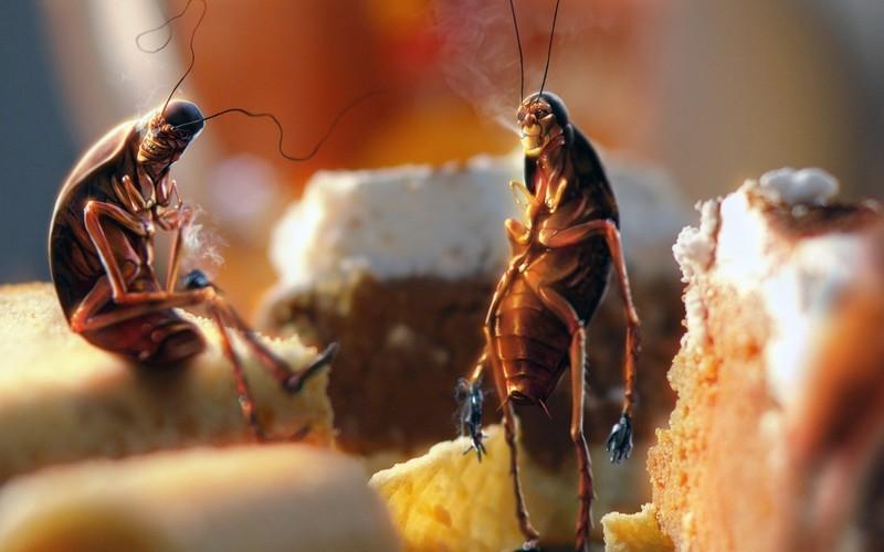 Free Roaches On Smoke Break phone wallpaper by twilight24z