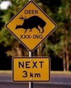 Sexy Deers Crossing Sign