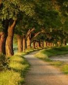 tree line wallpaper 1