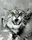 Free Wild Cat phone wallpaper by zestyred