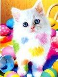Free kitty_rH9M7gxt.jpg phone wallpaper by twifranny