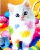 kitty_rH9M7gxt.jpg wallpaper 1