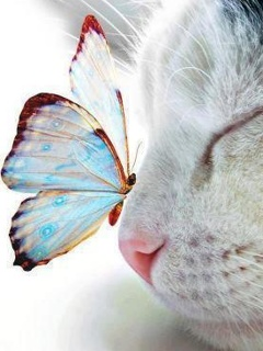 Free Cat an Butterfly.jpg phone wallpaper by twifranny