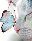 Cat an Butterfly.jpg